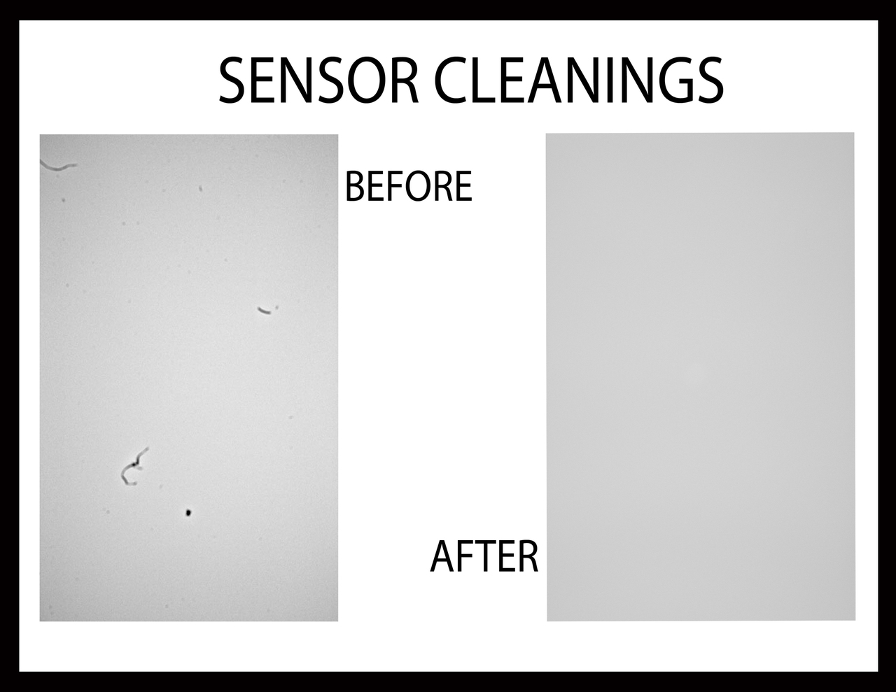 Getting Your Sensor Cleaned - Tell them Carlos Sent You!