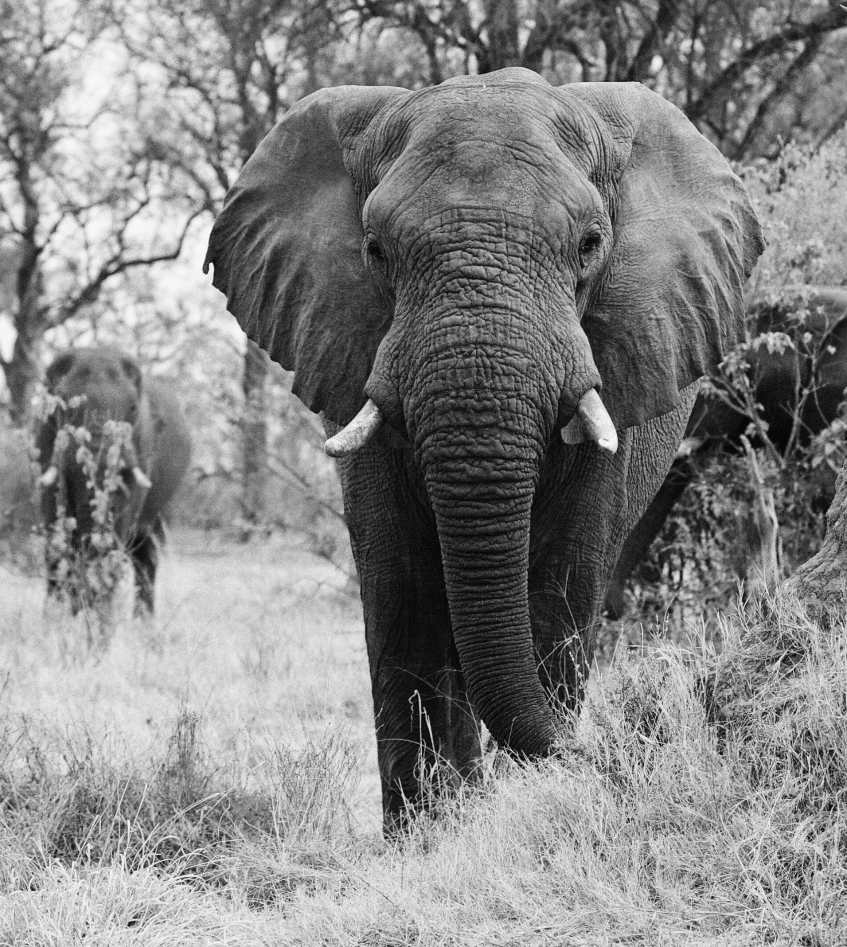 _MG_1867_Vic Falls©Grantly Mailes 2011.  All rights reserved_69.jpg