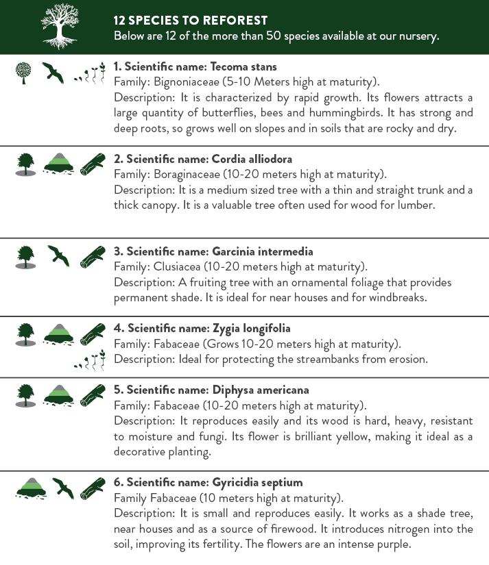 Booklet Reforestation Program ENG2.png