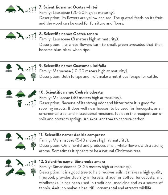 Booklet Reforestation Program ENG3.png