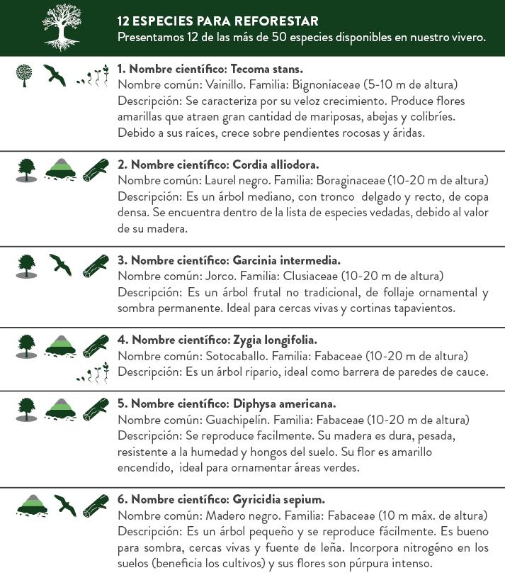 Libro de Reforestación2.png