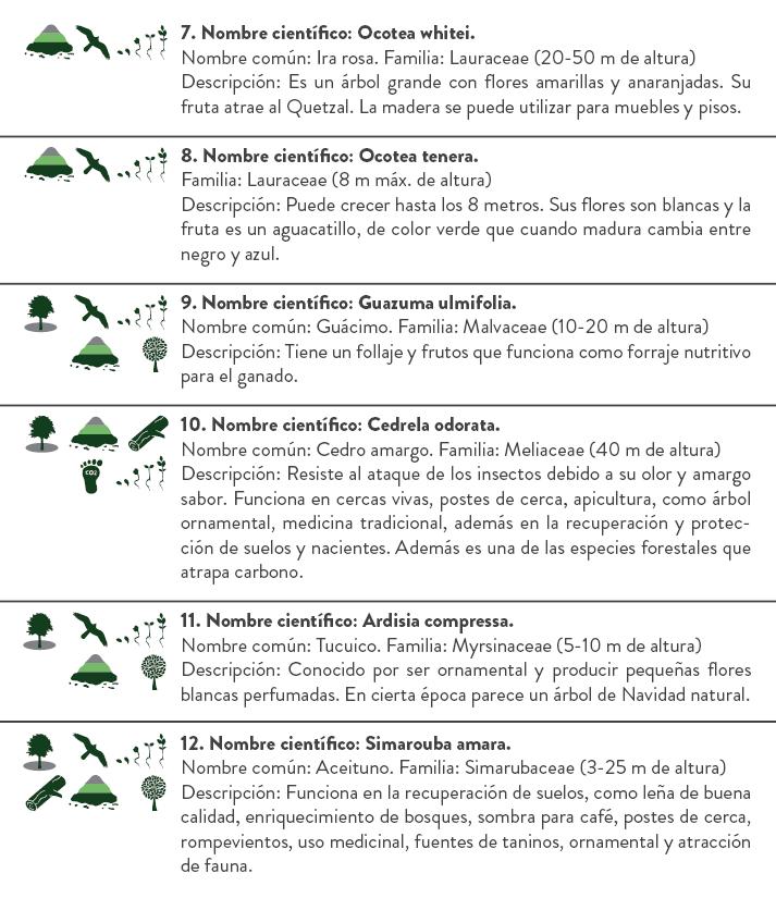 Libro de Reforestación3.png