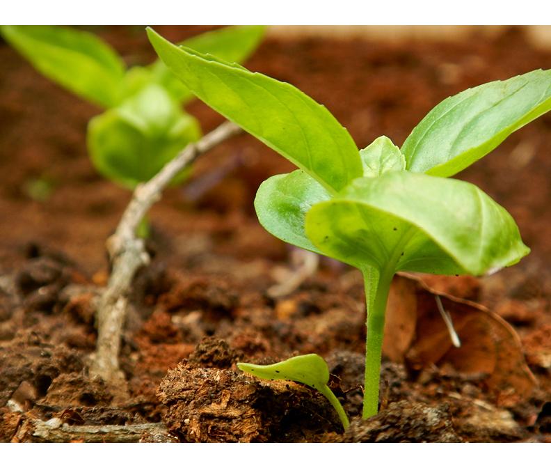 Blog Huertas Organicas.jpg