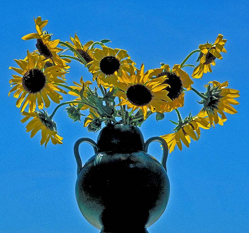 Van Gogh's Vase color