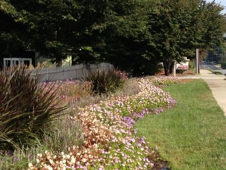 Gazebo Planting Sept13_3.jpg