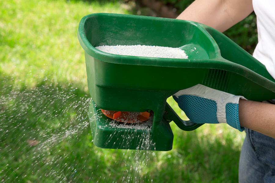 Fertilize your cool season lawn around Thanksgiving.