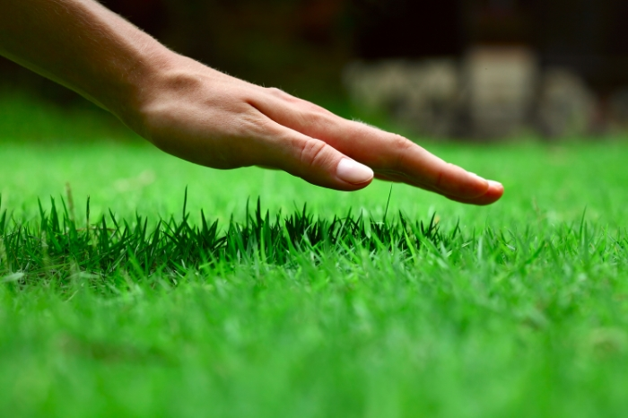 5 Tips for a Greener Summer Lawn