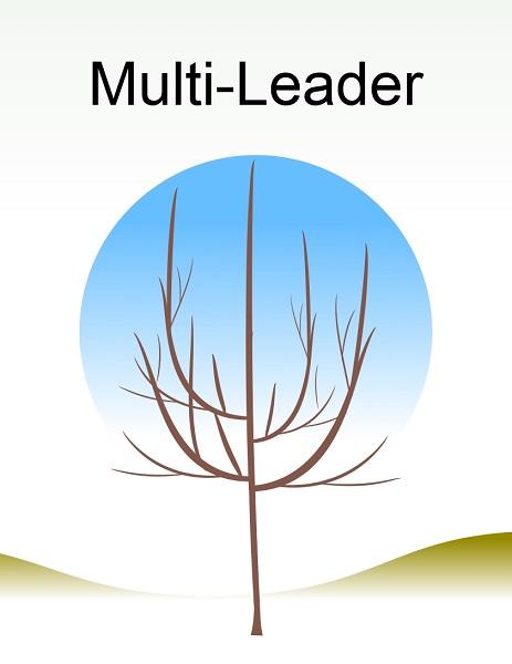 Multi Leader.jpg