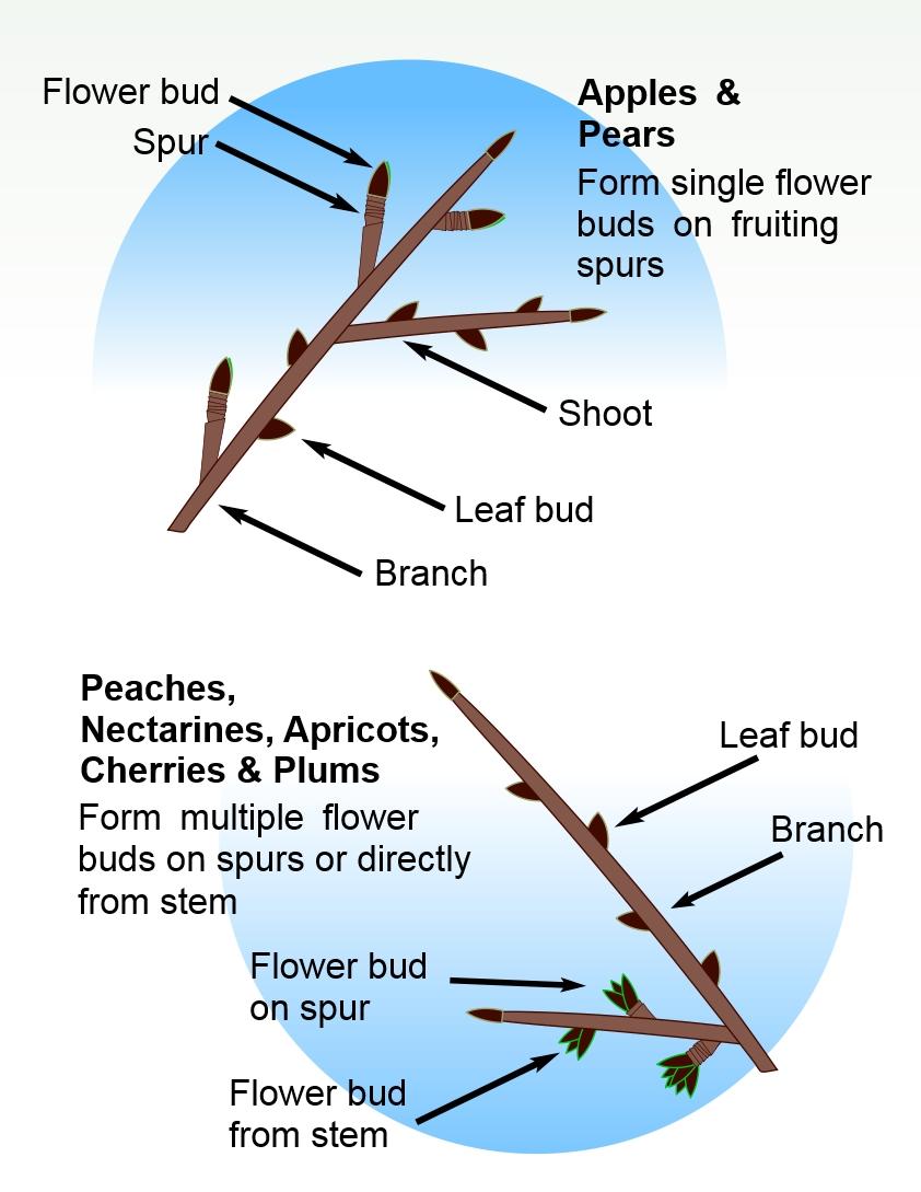 Branch glossary.jpg