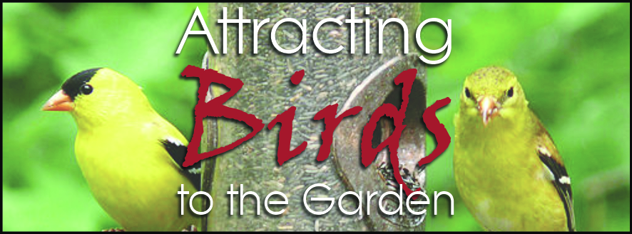 Attracting Birds to the Garden