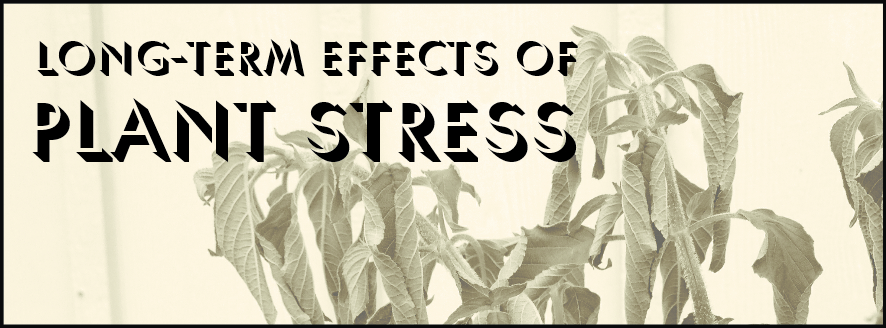 Long-term Effects of Plant Stress