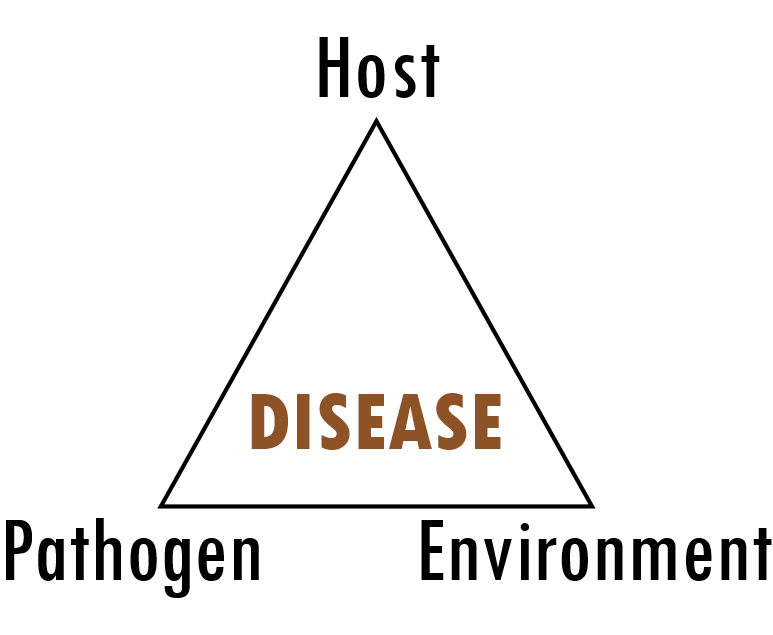 The Disease Triangle