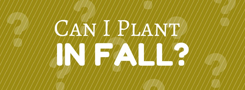 Can I Plant in Fall?