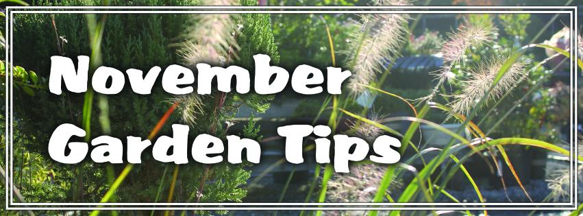 November Garden Tips