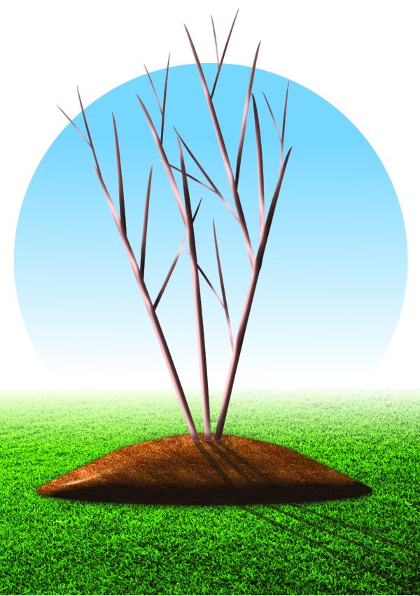"Improper tree mulching: the dreaded ""mulch volcano"""