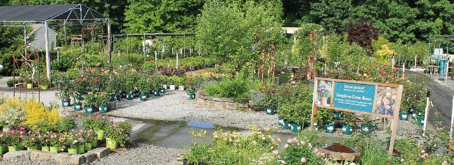 Landscape Plant Shortages