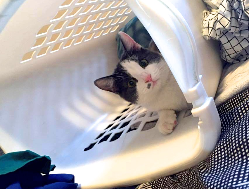 Stuart looking ridiculously adorable in a laundry basket