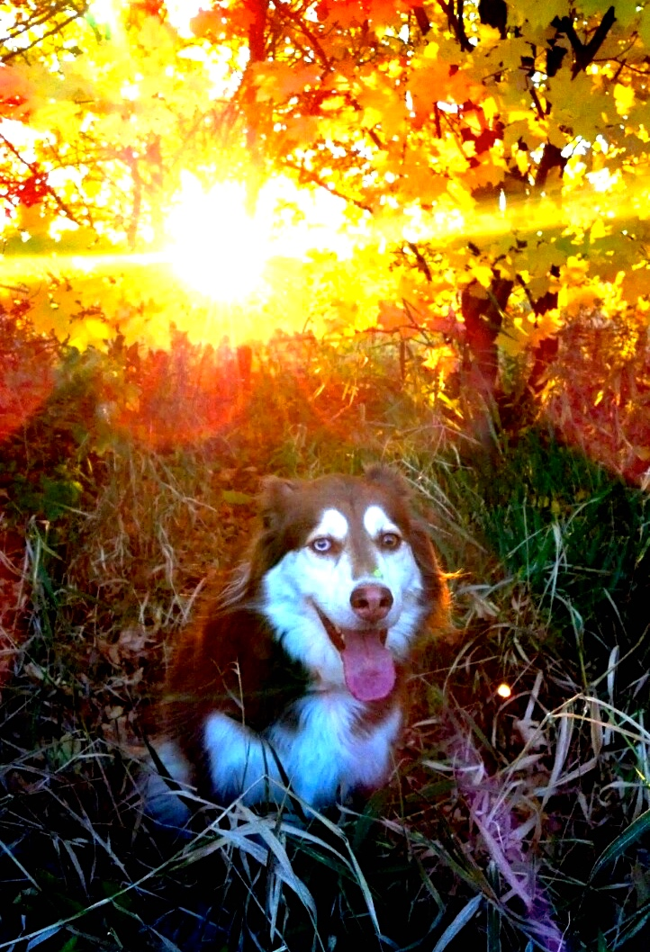 Maddie looking magical in front of the autumn sun.