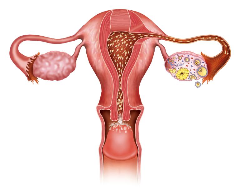 Uterus-Conception-Fertility-Atlanta.jpg