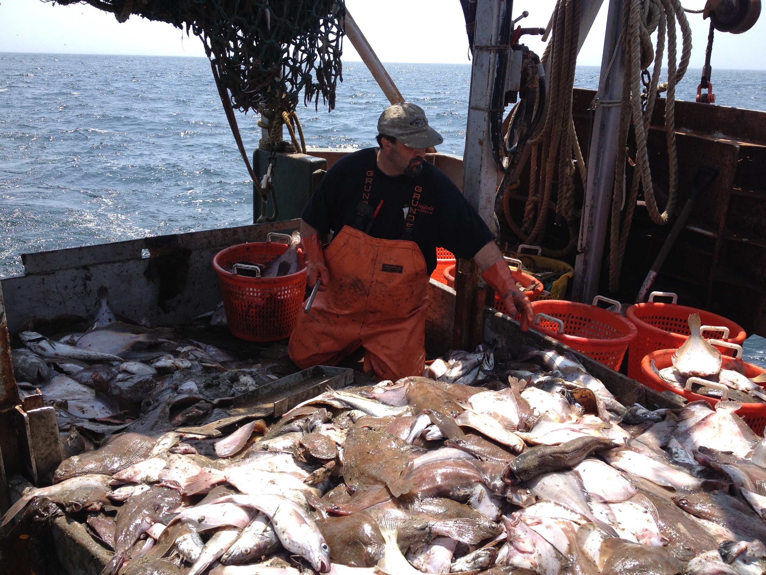 Fresh fish. From my day at sea working on a documentary about the death of the day boat fishermen.