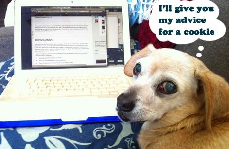 GracieBlogging.jpg