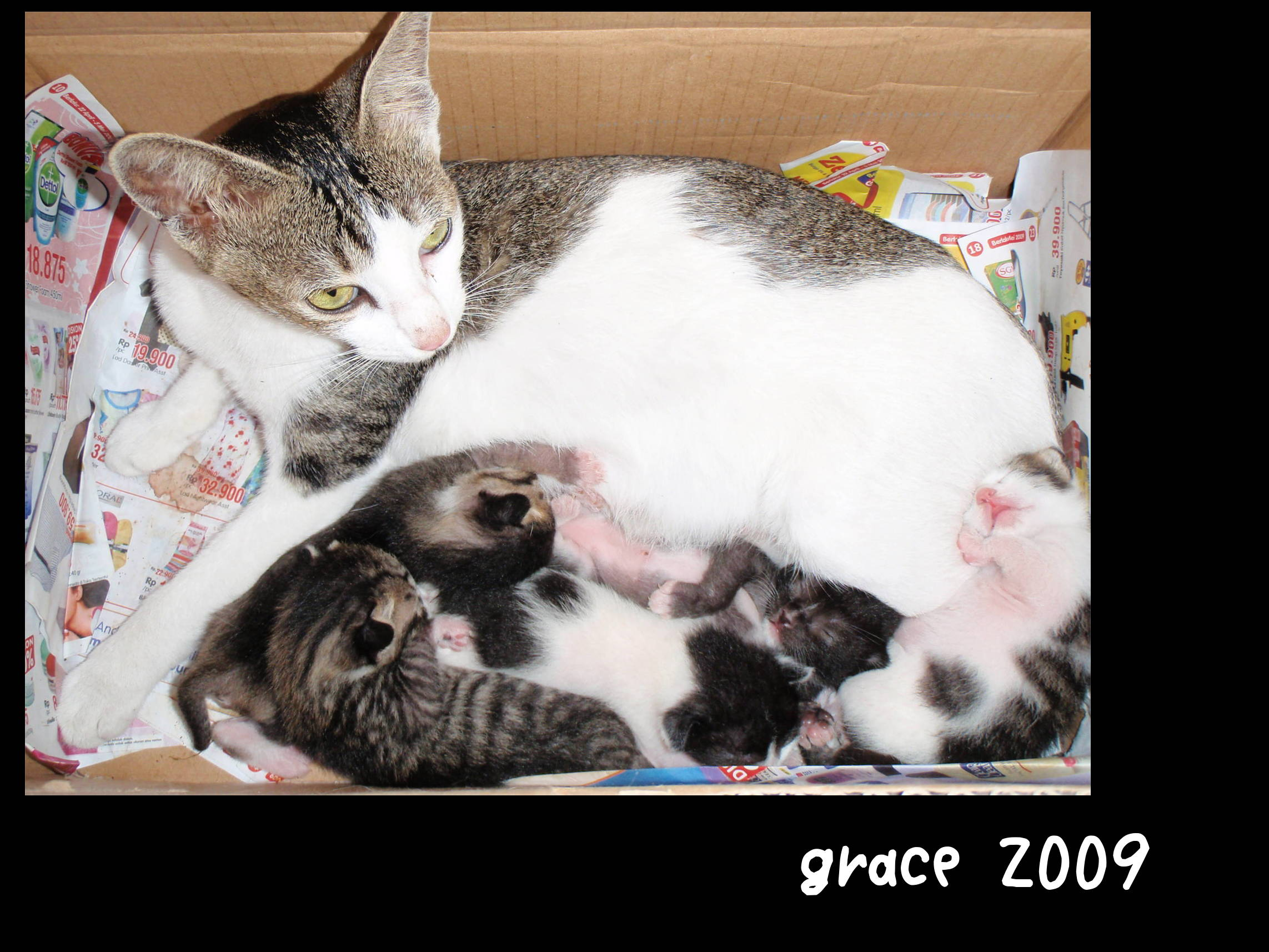 Amazing Grace and her kittens