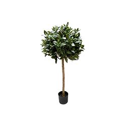 Lagerträd Olika storlekar Från 400:-/st
