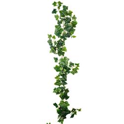 Murgröna Slingor ca 150 cm 80:-/st