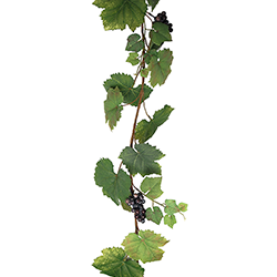 Vinrankor Slingor ca 150 cm 80:-/st