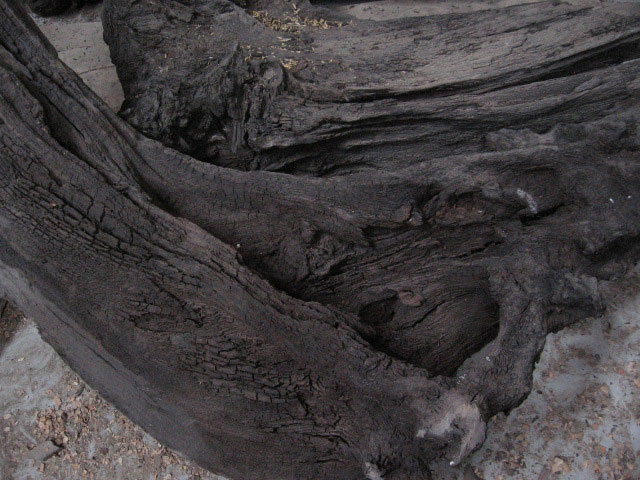 Bog-Oak_big.jpg