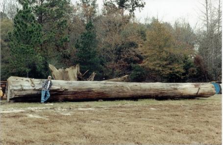 cypressmonster.jpg