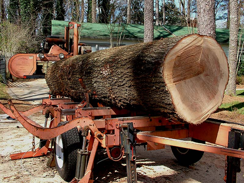 red_oak_ready_for_sawing.jpg