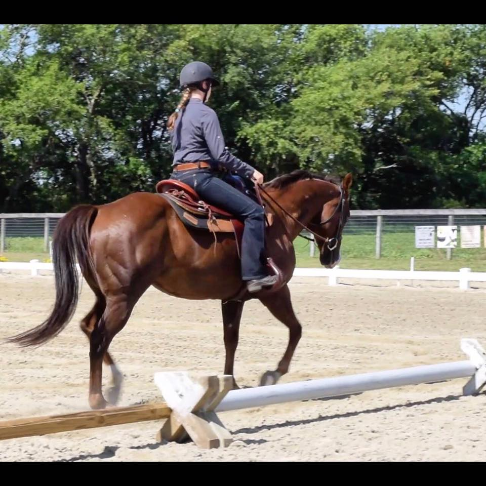 Scout at the Blue Moon Dressage Schooling Show June 26, 2016