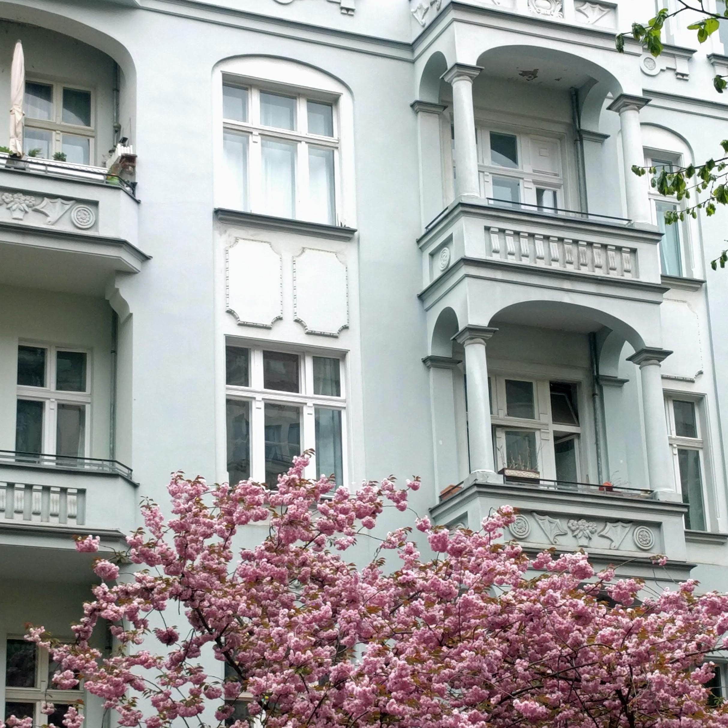 Cherry blossoms on RaumerStraße Prenzlauer Berg Berlin Germany