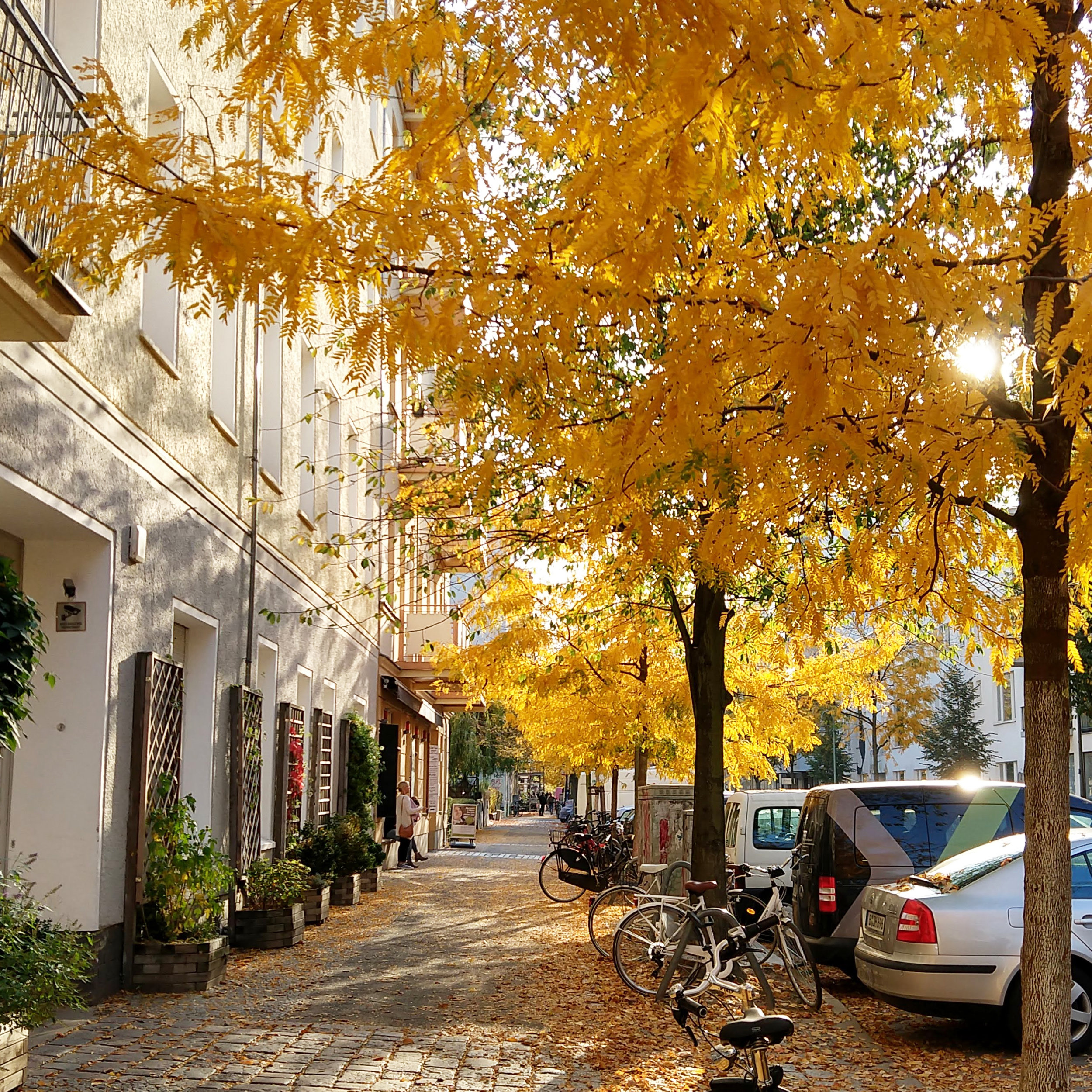 Fall in Prenzlauer Berg Berlin with Yellow trees by Jamie House Design. JHD Weekender, 7