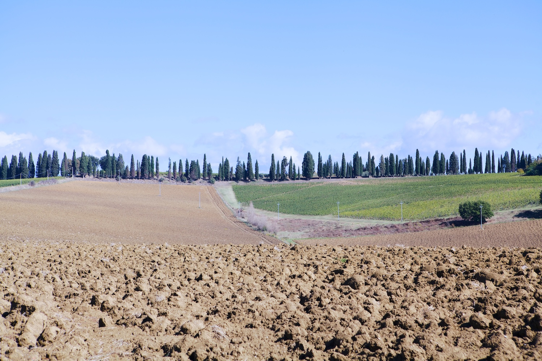 Tuscany_1.jpg
