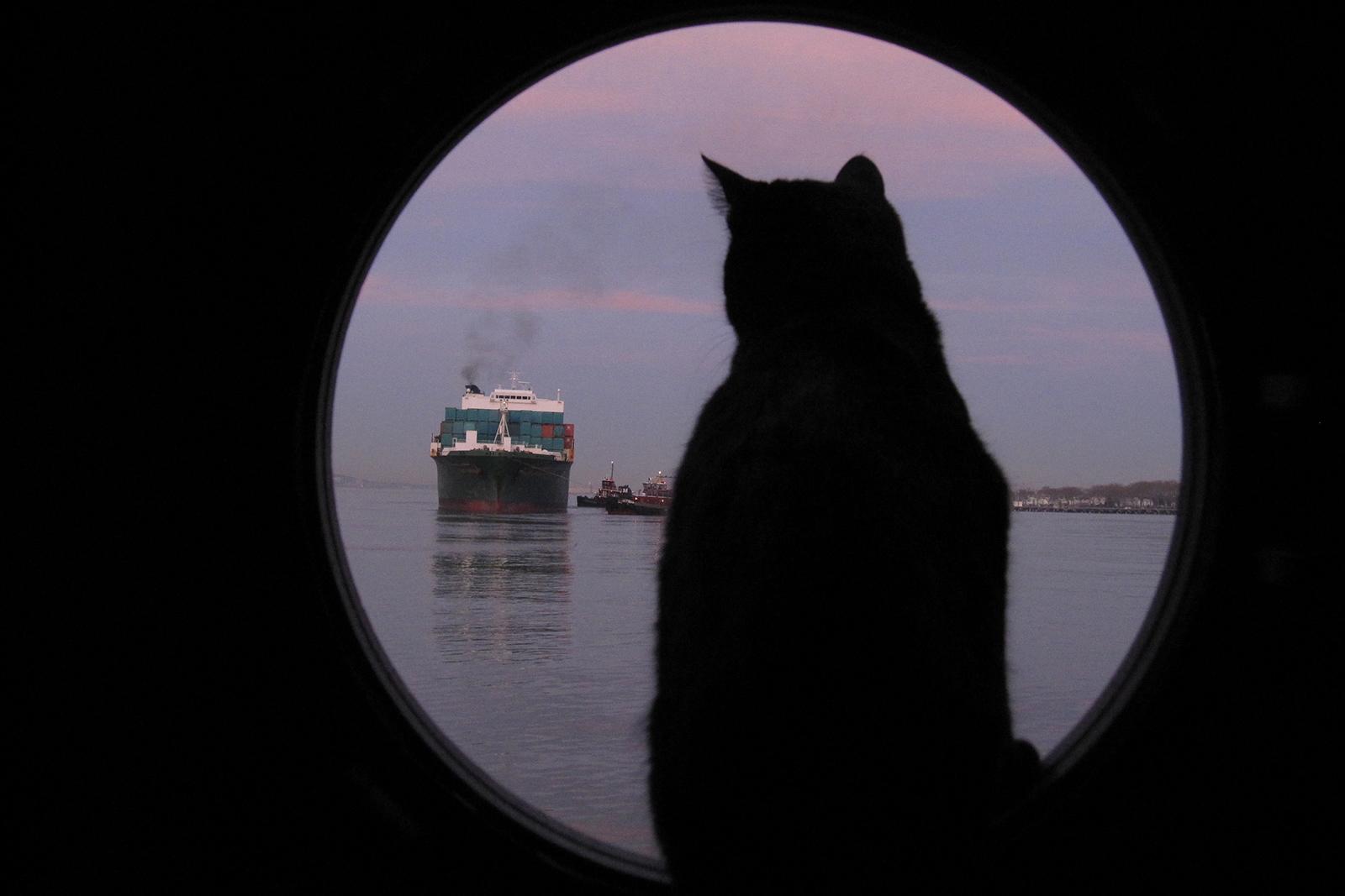 PortSide_ShipCatChiclet_1.jpg