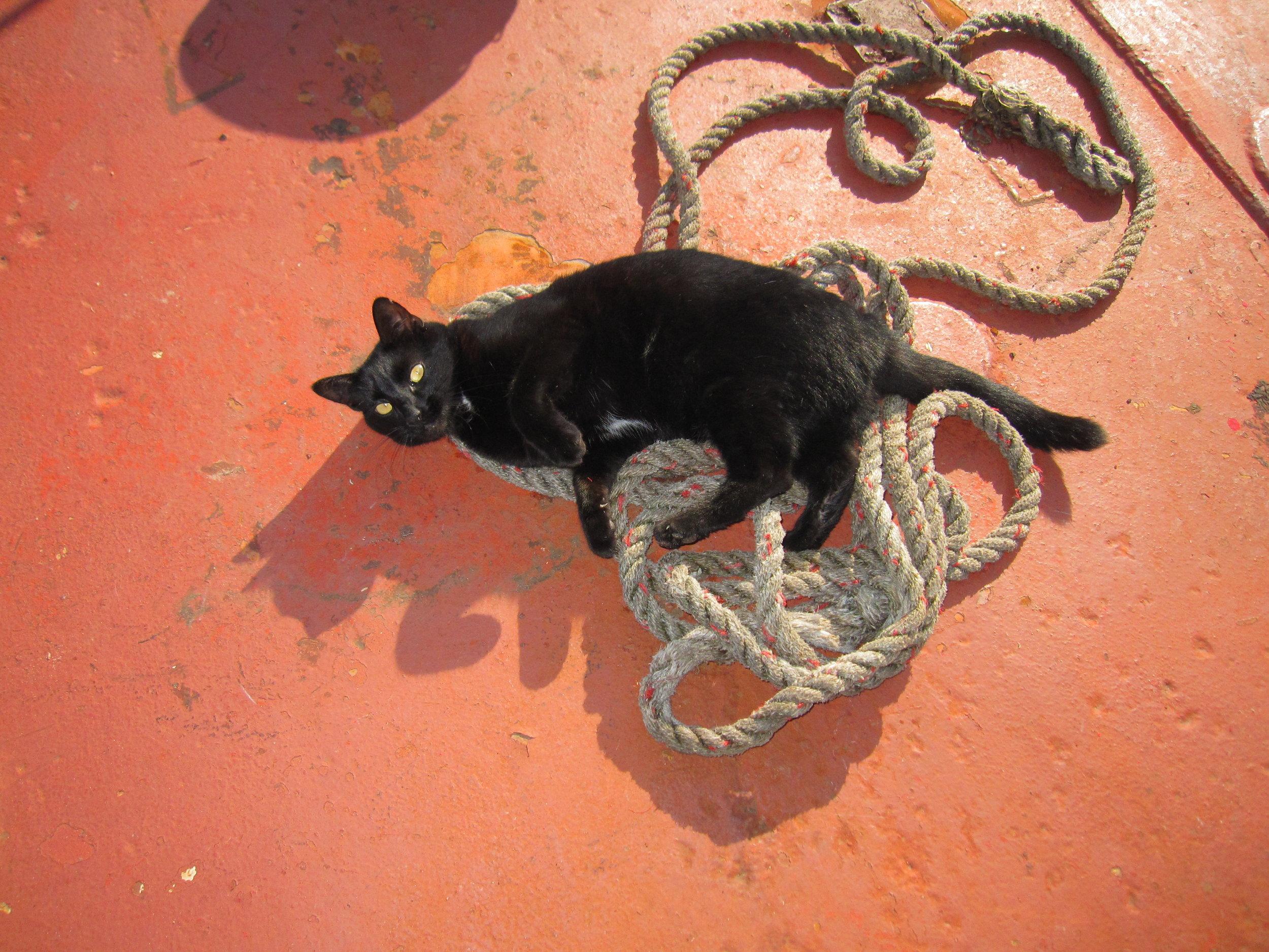 PortSide_ShipCatChiclet_4.jpg
