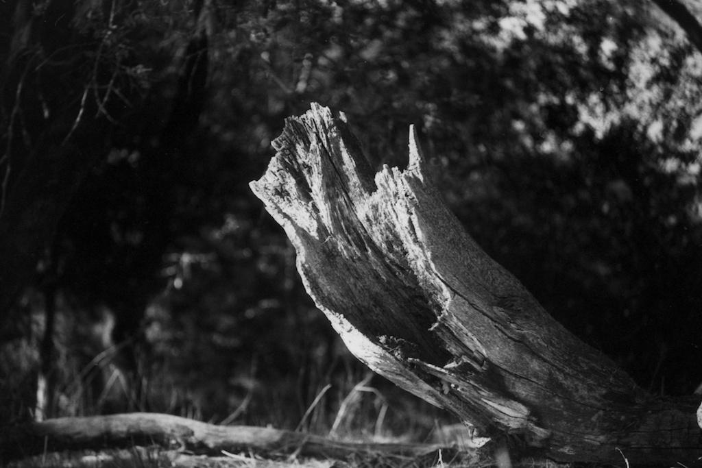 tree stump distance.jpg