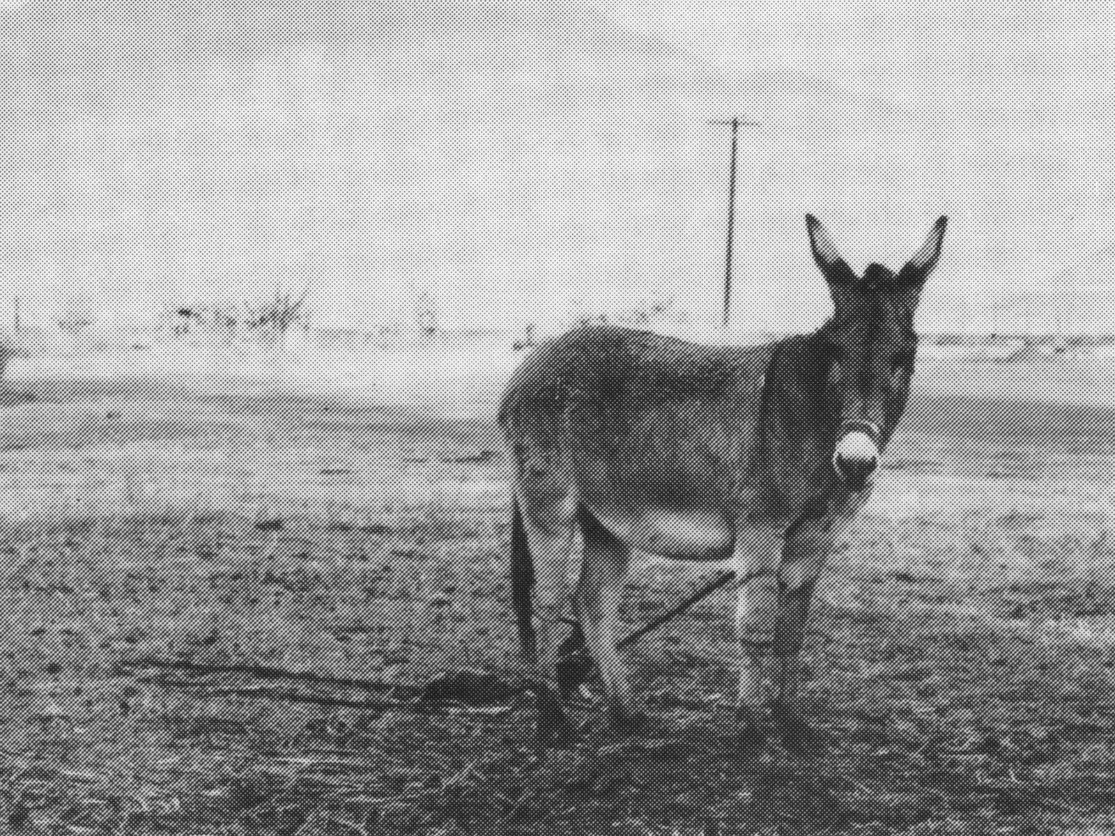 donkey_print_crop.jpg