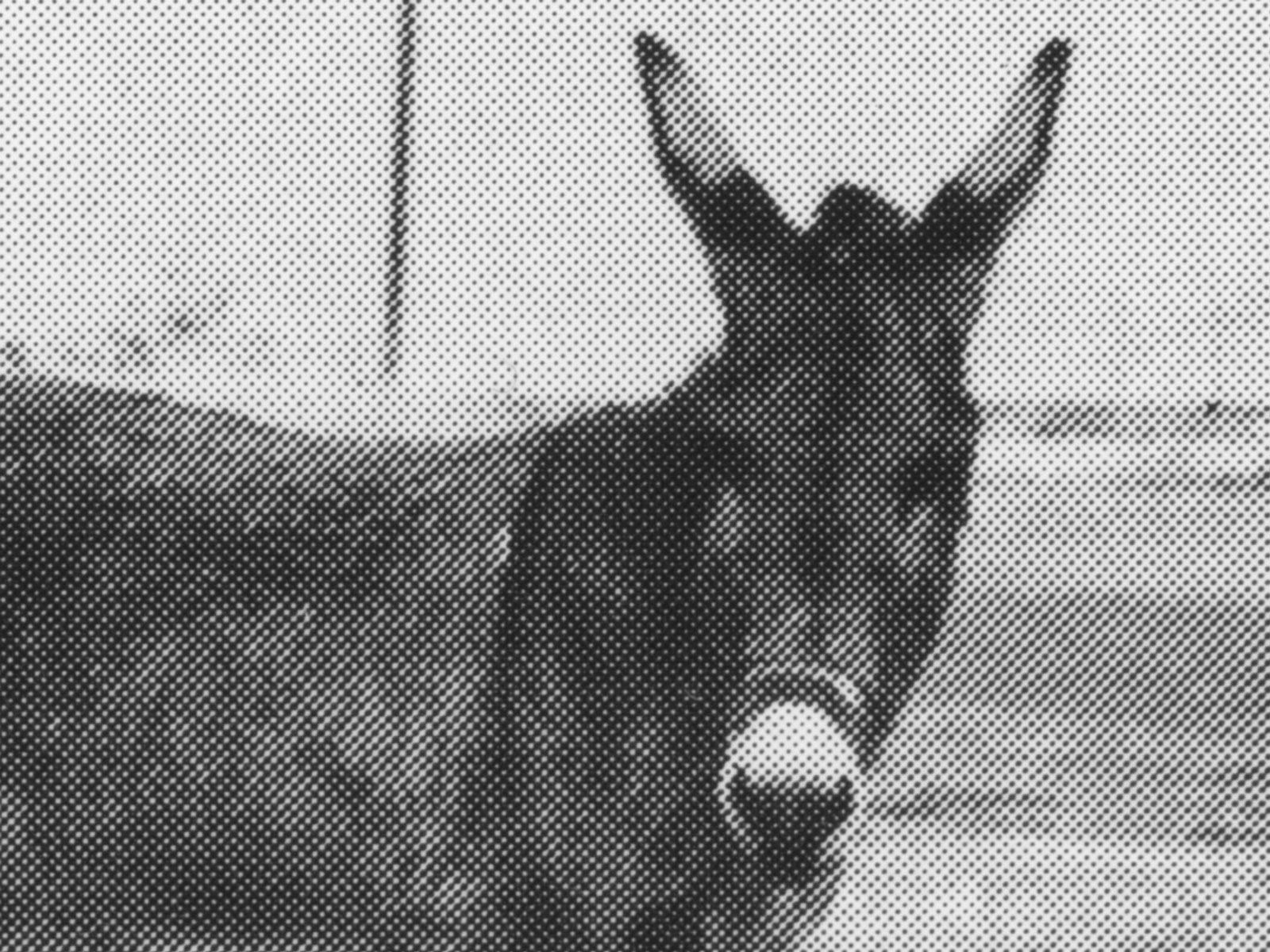donkey_print_detail2.jpg