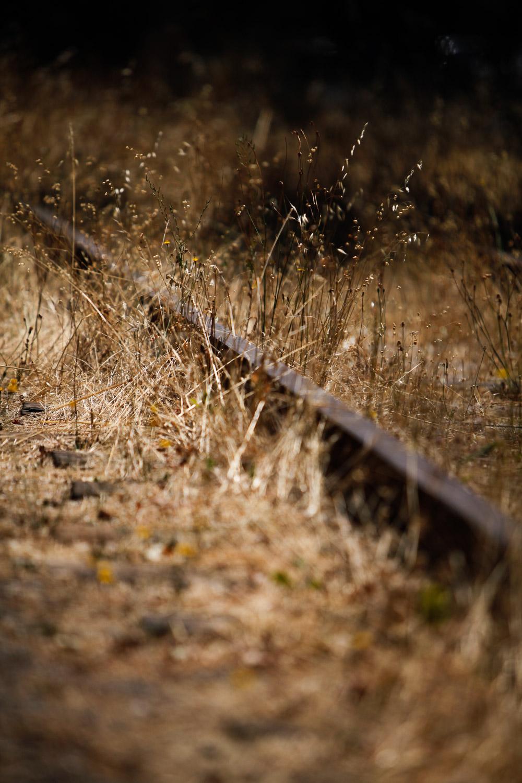 grass-train-tracks-growth