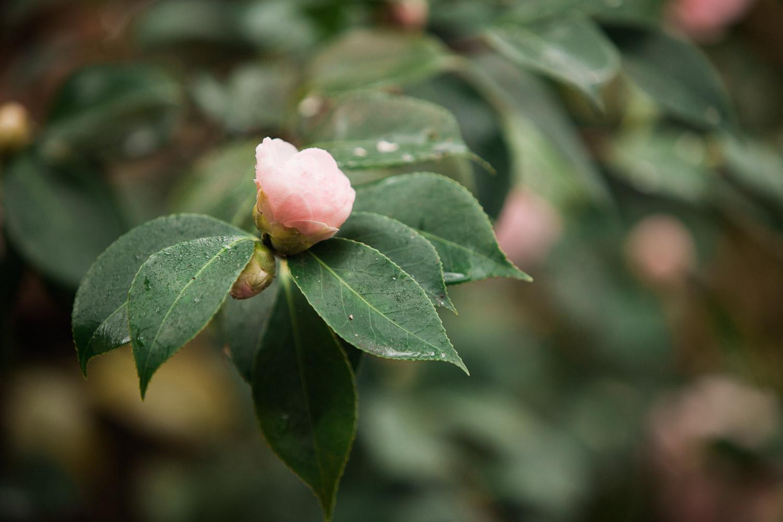flower-leaves-rain