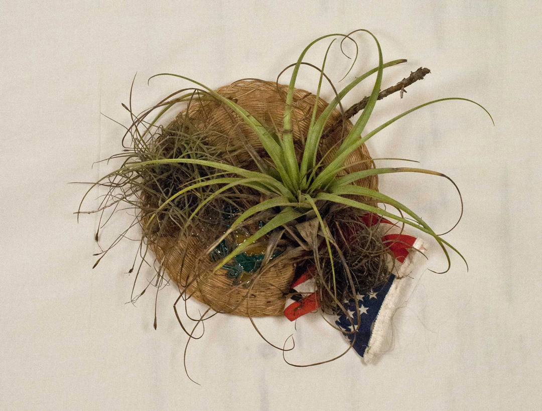 Re Seal    Woven wicker plate holder, glass window decoration, altered United States Flag, moss, epiphytic bromeliad (tillandsia fasciculata), ball-moss (tillandsia recurvata) tree branch, water.