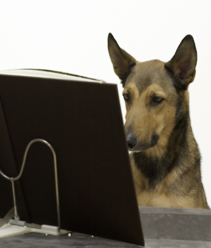 """""""ok...pick a class...let Kate know.....call South Bark. Now I just need to get my human to do that""""."""