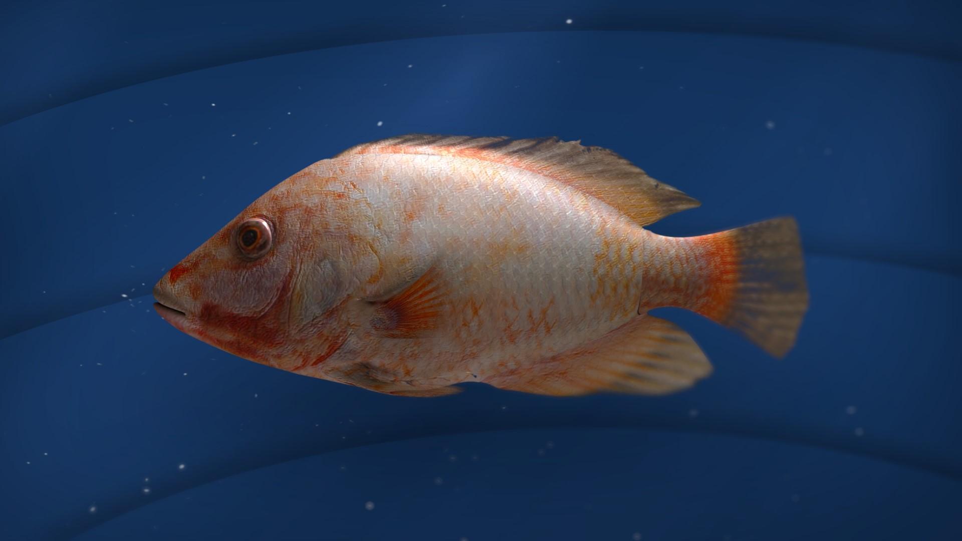 FISH_16X9_v009.jpg