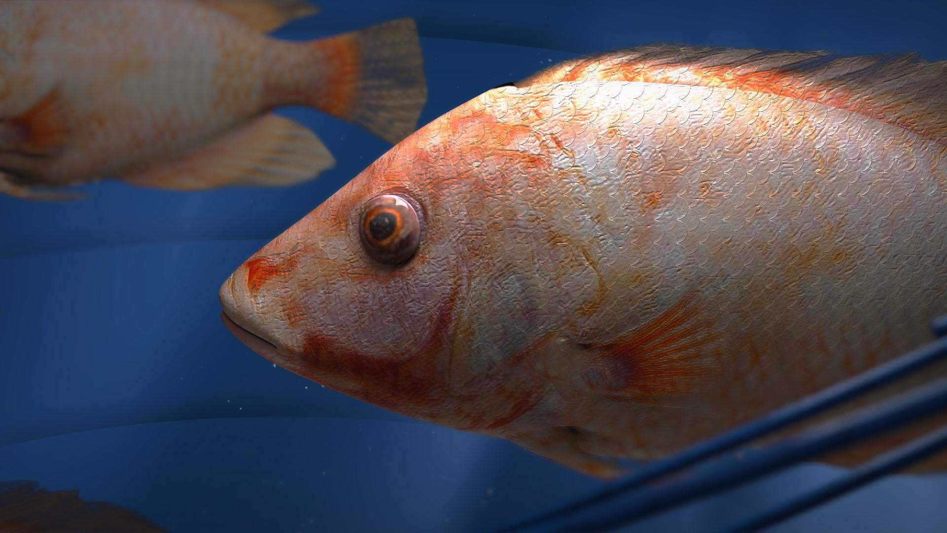 FISH_16X9_v007.jpg