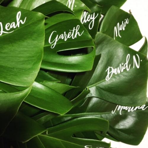 monserra leaves.JPG