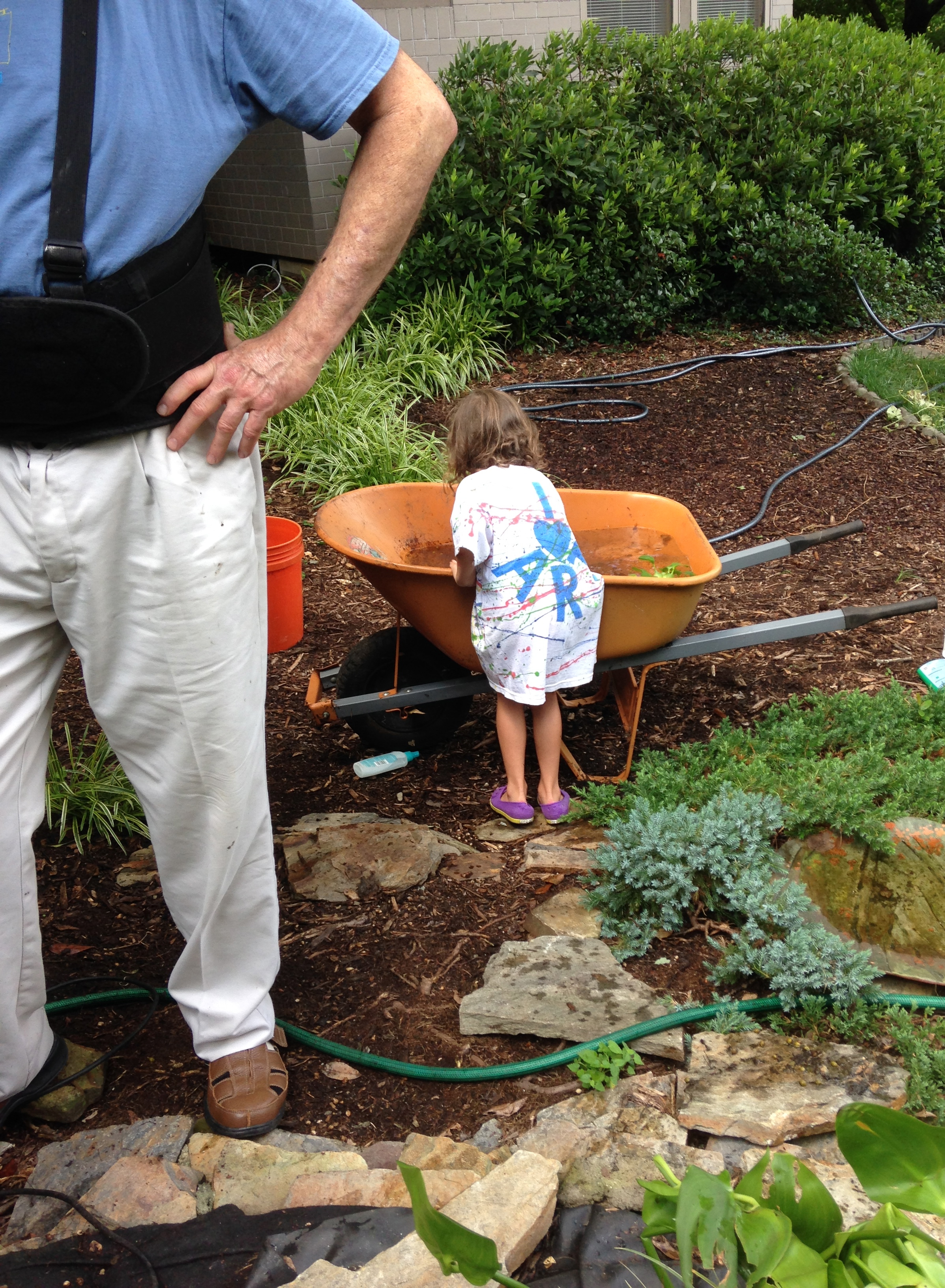Tending to the goldfish while their pond gets cleaned...