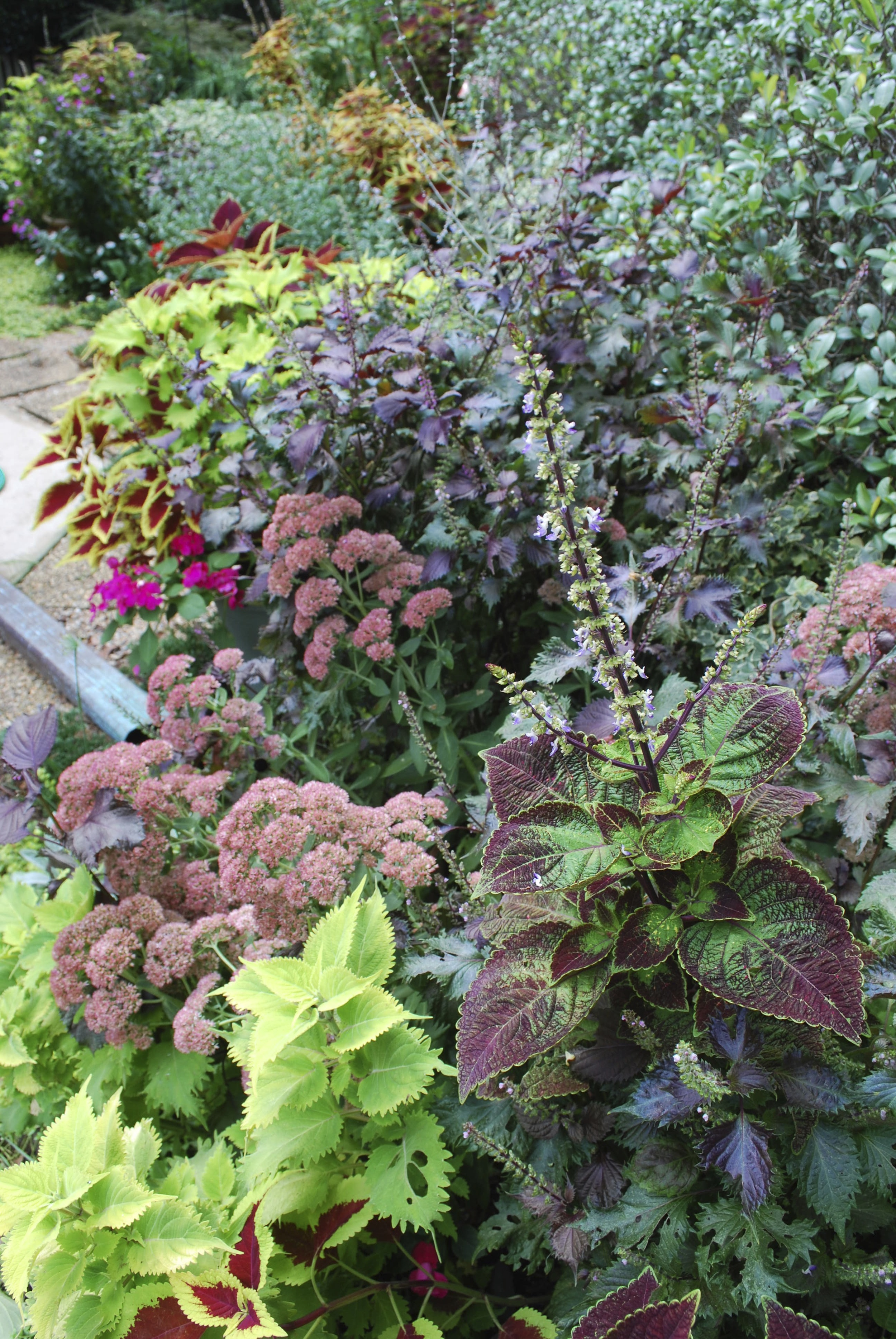 Sedums are another hardy plant that I love year round...